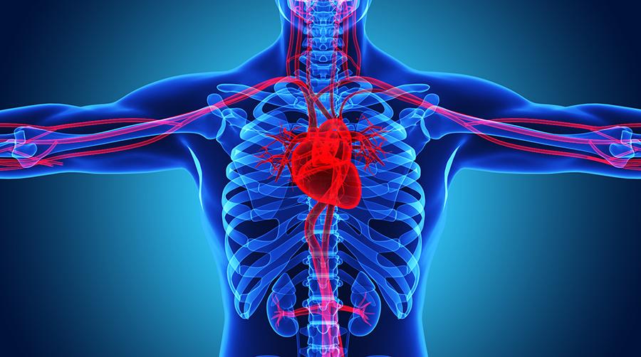 Cell子刊:我国学者发现,常用膳食补充剂肌酸,会促进肿瘤转移